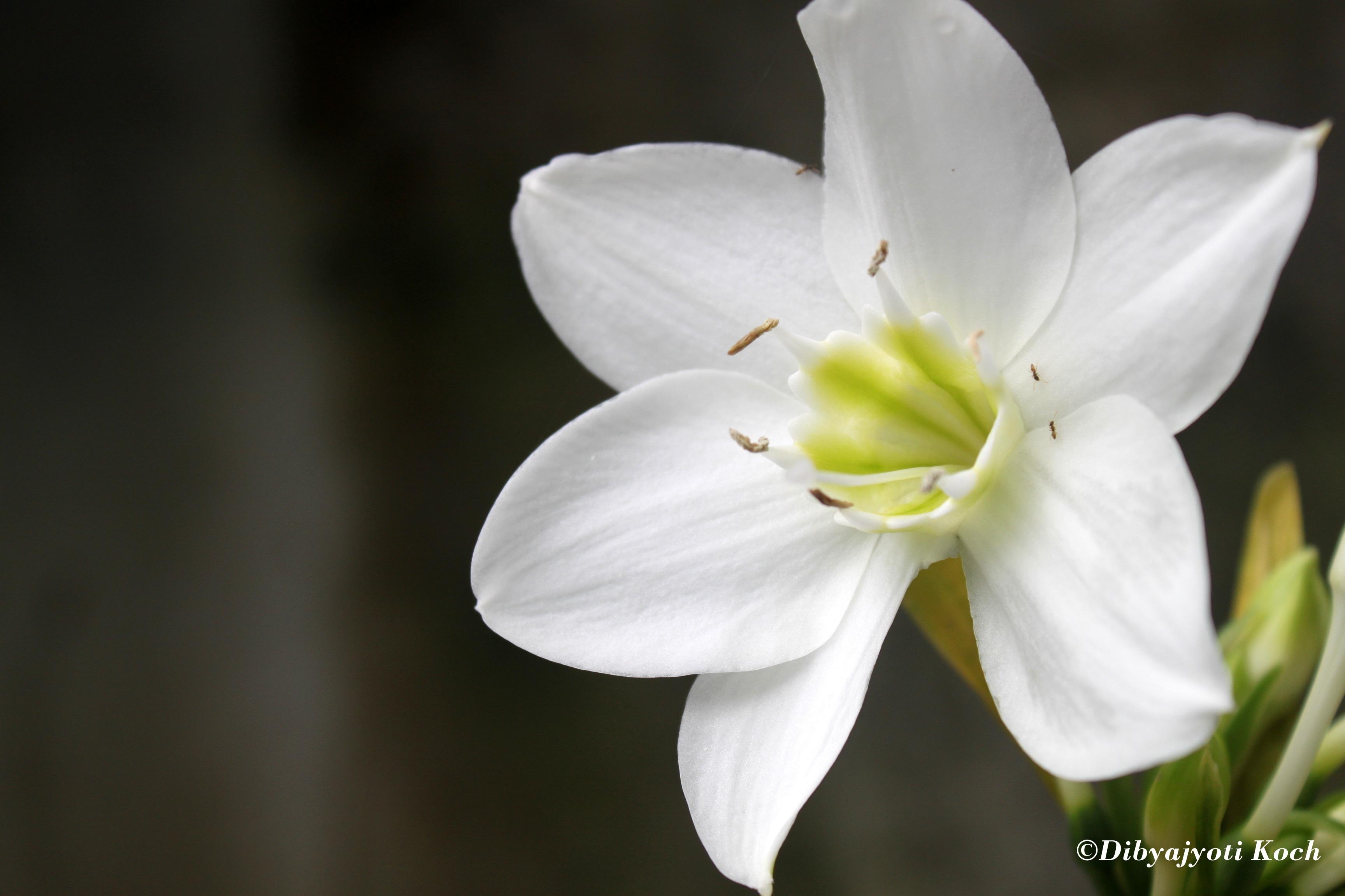 Beautiful flowers of Assam